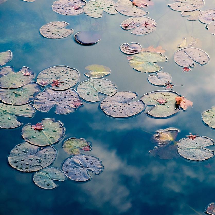 Soignies - stage d'été du 12 au 14 août 2019: Le jardin de la Villette (Le Quinquet asbl), made in Japan. Création de symboles du Japon à partir d'éléments du jardin